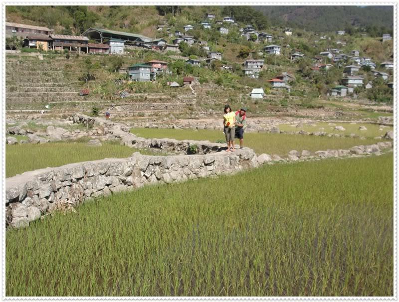 rice paddies walking