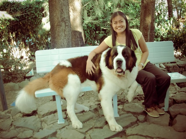 Doglas Baguio Dog – Up Close and Personal