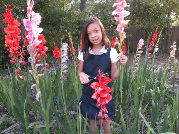 Gladiolus Garden Flowers