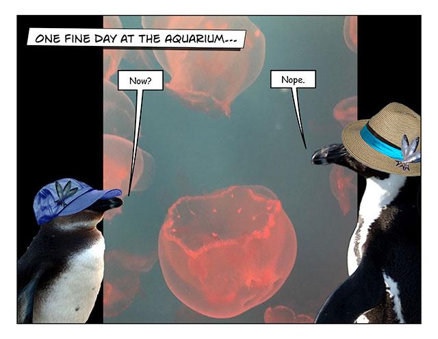 aquarinope-1.jpg