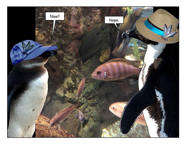 aquarinope-2.jpg