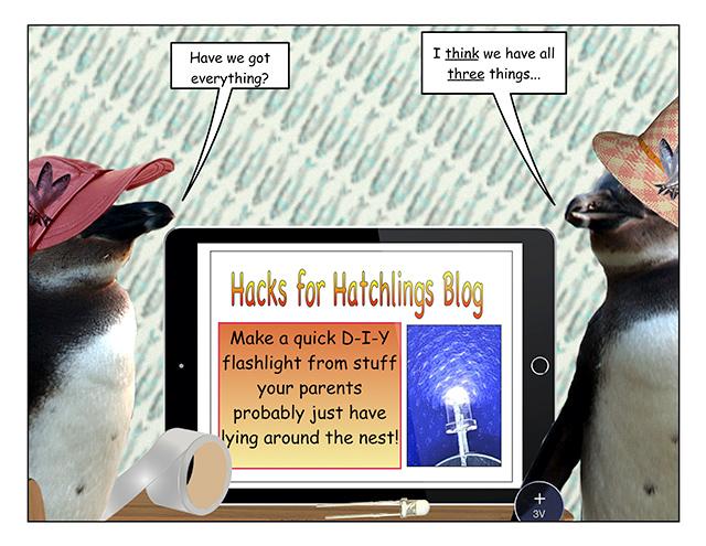 hatchhacks-1.jpg