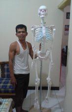 model kerangka manusia, rangka manusia