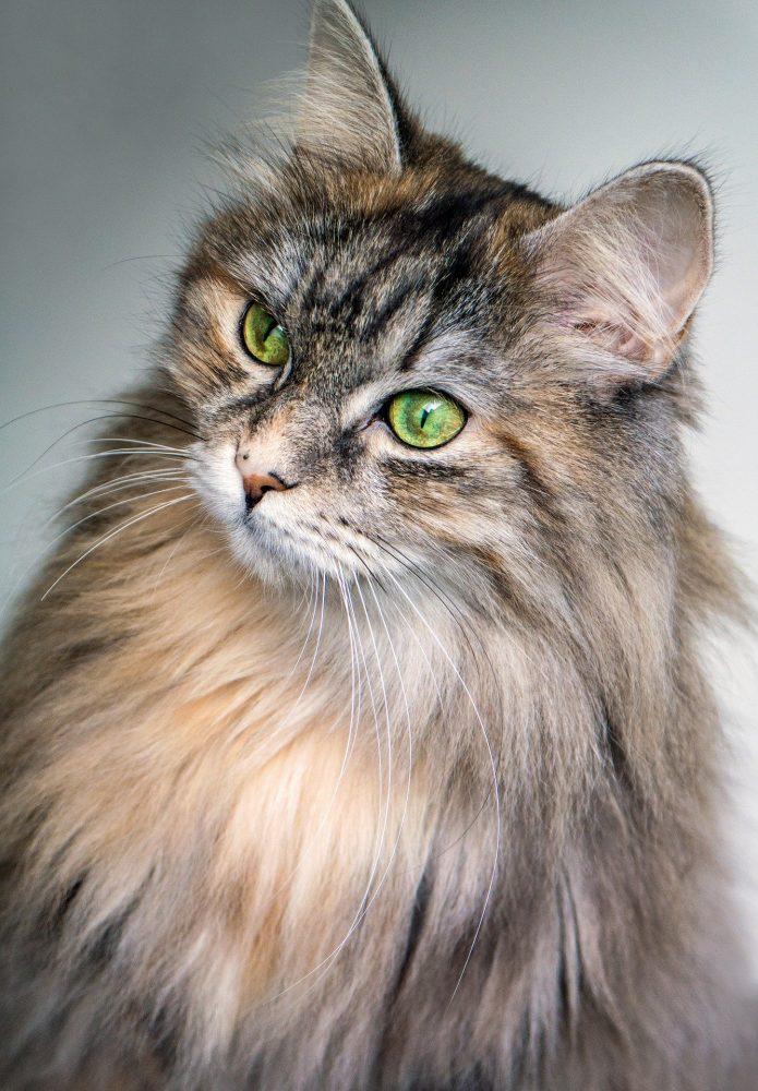 Lucu Banget Kumpulan Nama Nama Kucing Terlengkap