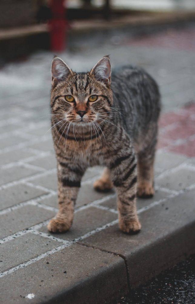 Nama Kucing Jantan 1