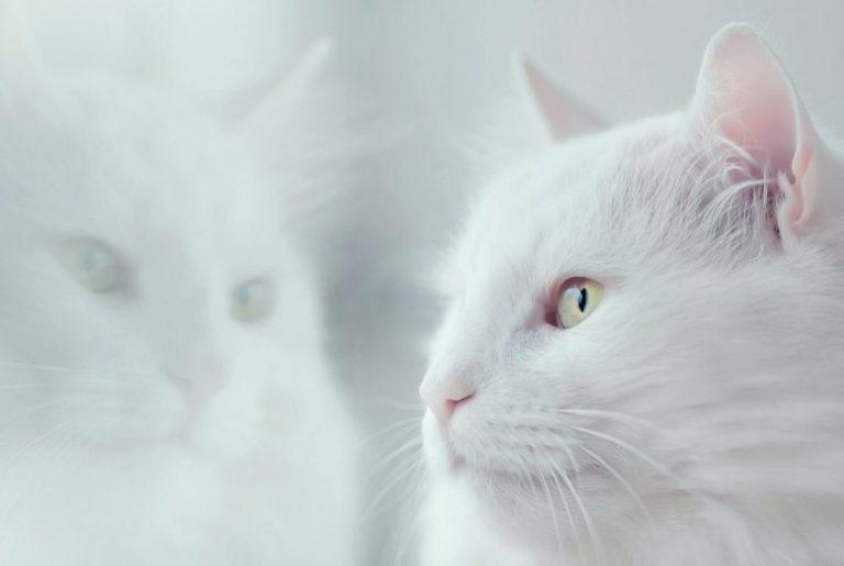 Paling Di Cari Kumpulan Nama Kucing Jantan Terlengkap