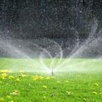 Memasang Sprinkler di Taman Rumah