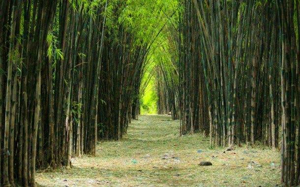 Hutan Bambu Kota Keputih