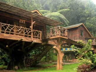 Taman Safari Lodge (sumber: agoda.com)