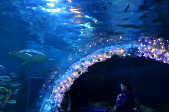 しながわ水族館のトンネル水槽の写真