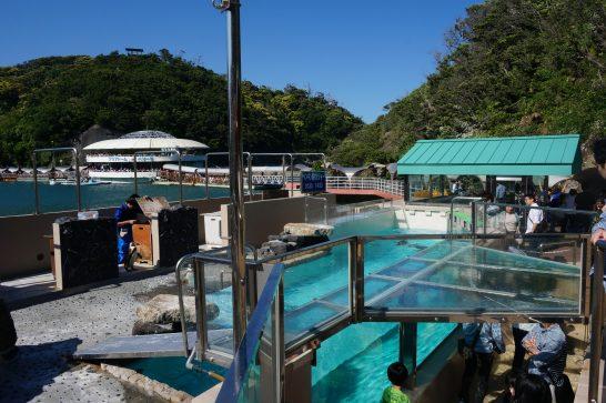 下田海中水族館のペンギンプール