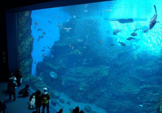 日本の海/うみの杜水族館