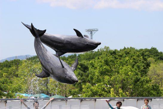 京都水族館のイルカスタジアム
