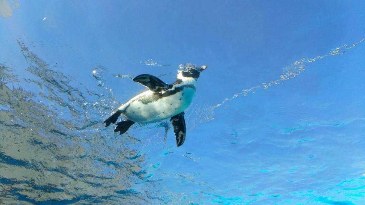 青空とペンギン@サンシャイン水族館