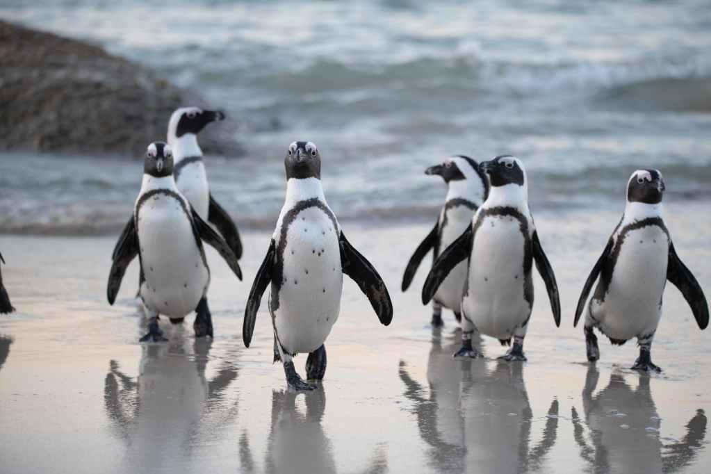 flock of penguins near sea