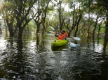 Kayaking the drowned forest.