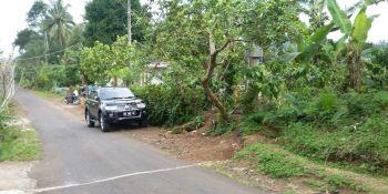 Jual Tanah Kebun 2 Hektar di Mundeh Selemadeg Tabanan