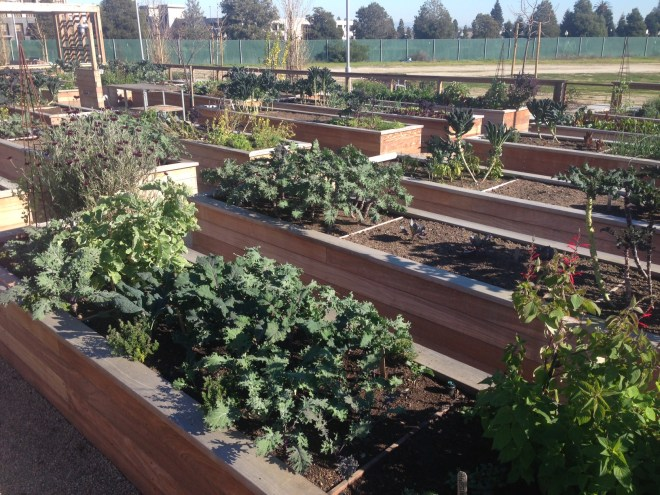 Community garden at Bay Meadows.