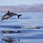 El domingo anterior el Parque Nacional Zona Marina del Archipiélago de San Lorenzo (PNZMASL) cumplió 5 años de haber sido decretado por el gobierno de México como área natural protegida (ANP).