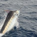 Pescadores de Los Cabos piden Lealtad y Honestidad