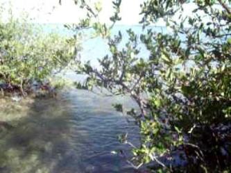 Exigen  a Profepa investigar lotificación del manglar El Conchalito