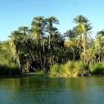 """Ubicada en la Reserva de la Biosfera """"El Vizcaíno"""", Laguna San Ignacio es una zona importante de alimentación para la tortuga prieta. El ámbito hogareño condiciona el comportamiento de un animal, pues depende de sus hábitos alimenticios, de los recursos disponibles en el área y de la topografía del hábitat."""