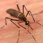 Ante los datos estadísticos sobre la proliferación de dengue en el Municipio de Los Cabos, la Secretaría de salubridad y Asistencia requiere de la ciudadanía para prevenir la existencia de esta enfermedad.