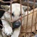 Esta ley pretende que todos los perros de hogar tengan collar y reciban la atención médica necesaria.