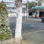 Este año la Dirección General de Servicios Públicos ha puesto en marcha un original programa para reutilizar la materia orgánica que de otra manera sería un horrible espectáculo que continúa afectando la ya de por sí deteriorada imagen urbana de la ciudad de La Paz.