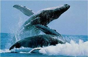 El sábado, VI Simposio Estudiantil de Ecología de Ballenas