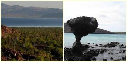 Declaran a Balandra y Asunción áreas naturales protegidas