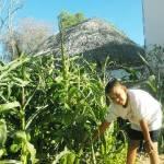 """La UABCS y el Jardín Comunitario Encinas impartieron el taller """"Agronomía en tu patio: suelos, hortalizas, plagas y riego en la producción familiar de hortalizas orgánicas""""."""