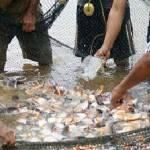 """""""La clara vocación regional de la pesca y acuicultura en el estado no sólo es deportiva como en la parte este sino que, por el lado del oeste de Bahía Magdalena y Punta Eugenia hay un potencial de medio millón de toneladas de producción anual que está siendo desaprovechada"""" expresó Sergio Hernández Vázquez, director del CIB."""