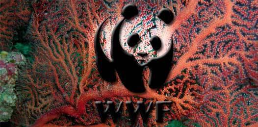 Recolecta la WWF firmas para pedir al presidente Calderón cancele el desarrollo Cabo Cortés