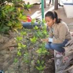 La estudiante Ilse Reyes Medina desarrolló una estancia de investigación, durante el verano 2011, con la Dra. Raquel Muñiz Salazar de la UABC, como parte de un proyecto en colaboración con el Programa de Investigación en Botánica Marina de la UABCS.