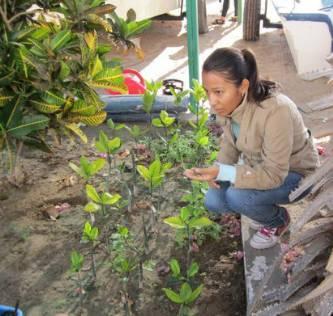 Trabajan investigadores de la UABCS en proyecto de reforestación de bosques de manglar