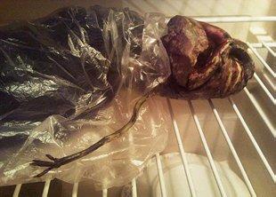 Guardaba un extraterrestre… en el congelador