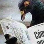 En 2011 salió a la luz una noticia que destacaba que las palomas mensajeras de Murcia en España serían sometidas a exámenes antidopaje, y para los dueños de estas la ley los multaría en caso de encontrarse restos de sustancias prohibidas en estas aves.