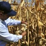 Pedro Vázquez González, coordinador de los diputados petistas recordó que el pasado 15 de diciembre fue aprobado un recurso especial por 10 mil millones de pesos, destacando la contingencia climatológica que afectó a más de 989,000 hectáreas de superficie agrícola y 1, 750,000 cabezas de ganado.