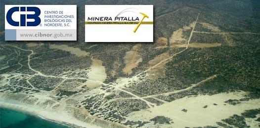 Prepara el CIBNOR los estudios de impacto ambiental para La Pitalla