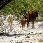 De acuerdo con datos de Vázquez Gávez, mil 213 municipios del país sufrieron, en algún grado, los efectos de la sequía, desde leves hasta extremos.