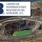 Al no ser revisado aún por el Consejo de Uso de Suelo, los mineros confiaron en que el estudio realizado por el Centro de Investigaciones Biológicas del Noroeste (CIBNOR) será analizado posteriormente una vez que su cumplan los requisitos de ingreso