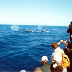 El programa inició este martes con tours de avistamiento de ballenas a Puerto Adolfo López Mateos para estudiantes de bachillerato.