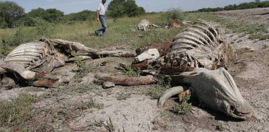Esta es la peor sequía en 72 años, reconoce SEDESOL