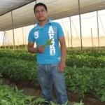 Carlos César Méndez Raya, estudiante de la carrera de Ingeniero Agrónomo de la UABCS, realiza una investigación sobre la densidad óptima para el cultivo de albahaca en condiciones de ambiente protegido.