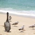 El Comité Municipal de Playas Limpias, asignó a sus integrantes la lista de tareas que, en la próxima reunión habrán de presentar, a fin de cumplir el objetivo para el que fue creado, y que consiste en mejorar, de manera integral, las condiciones de las playas en todo el municipio, lo que permitirá seguir promocionándolas en terreno internacional.