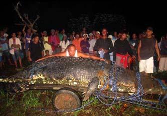 Más de 100 personas fueron necesarias para capturar y sacar del agua a este espécimen en una caza que se prolongó tres semanas.