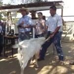 El pasado 27 de junio de 2012, en la Unidad de Caprinos y Ovinos y en el Laboratorio de Sanidad Animal de la UABCS se llevaron a cabo las prácticas de campo del curso teórico-práctico de producción ovino-caprino.