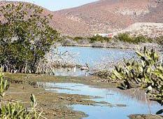 El compromiso de Paraíso del Mar, dijo la supervisora ambiental, es lograr que el Estero Enfermería se encuentre en condiciones óptimas, avaladas por autoridades ambientales.