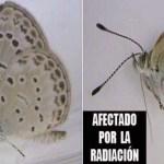 Científicos japoneses reportan anomalías genéticas en insectos derivadas de la crisis nuclear; analizarán otras especies de animales.